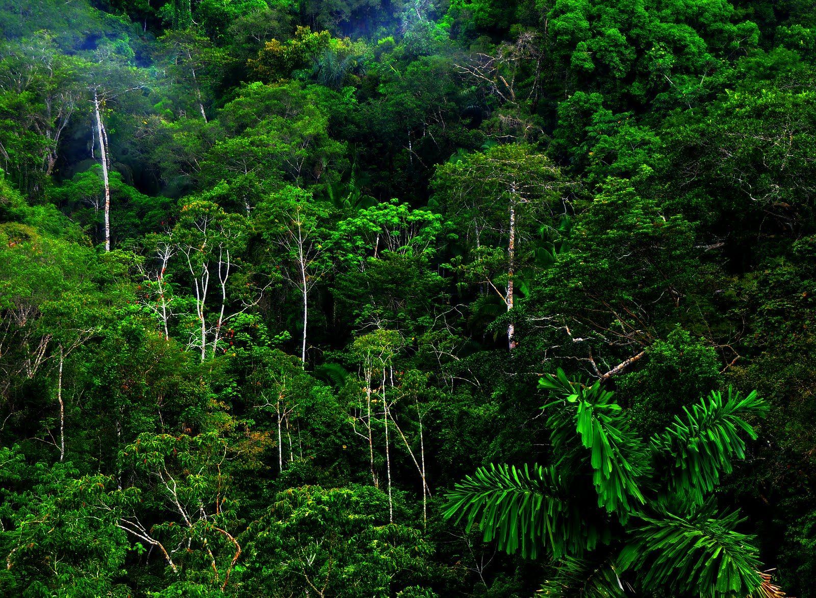 Tropical Forest Wallpapers And Photos In High Resolution For
