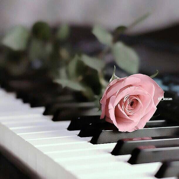 الموسيقى تجعلني احلم تأخذني إلى عالم آخر حيث أستطيع ان انسج أحلامي واعيش في سلام داخلي بعيدا عن الواقع Flowers Pink Flowers Beautiful Wallpapers