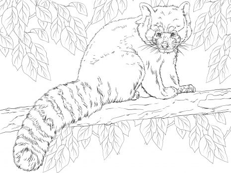 Red Panda Sitting On Branch Coloring Page Super Coloring Panda Coloring Pages Bear Coloring Pages Animal Coloring Pages