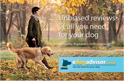 Find And Review Dog Groomers In Your Local Area And Get The Best For
