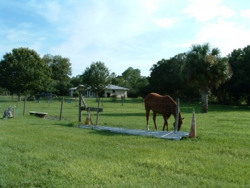 19.5 Acres with so many possibilities!!