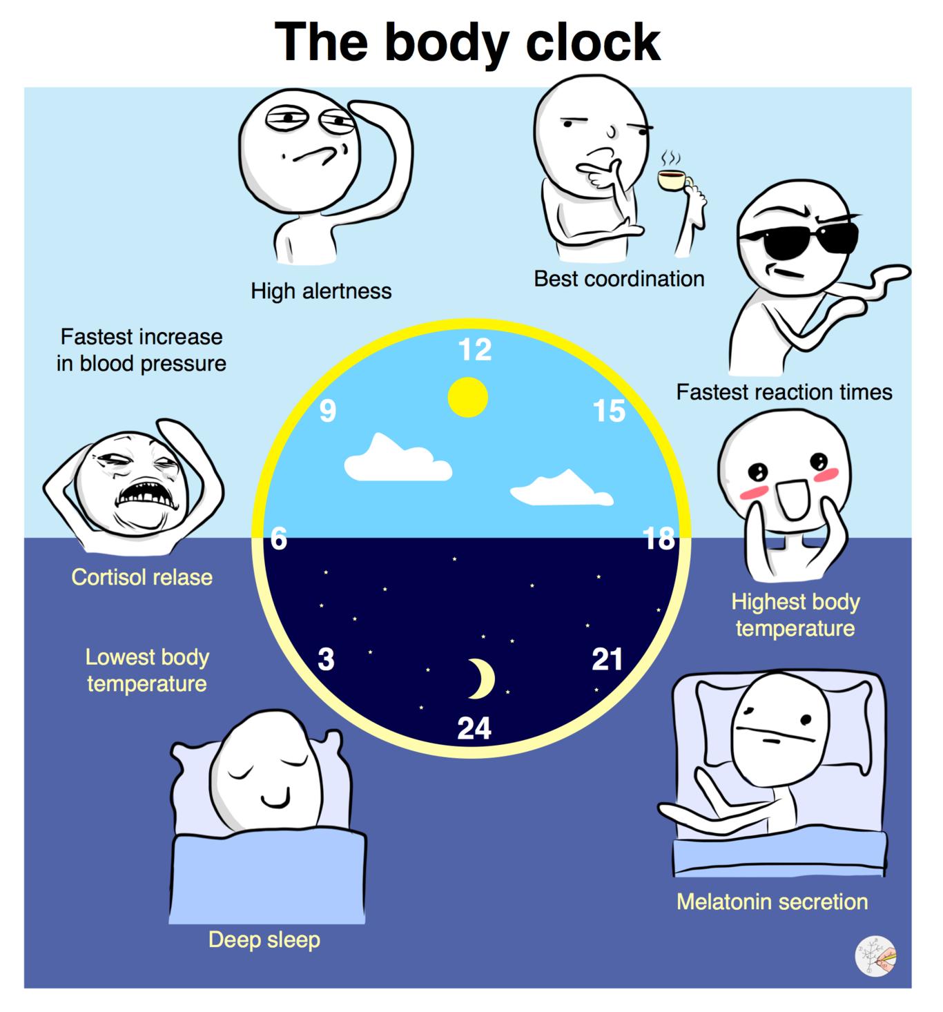 Jet Lag Blame Your Body S Clock Body Clock Circadian Rhythm Body