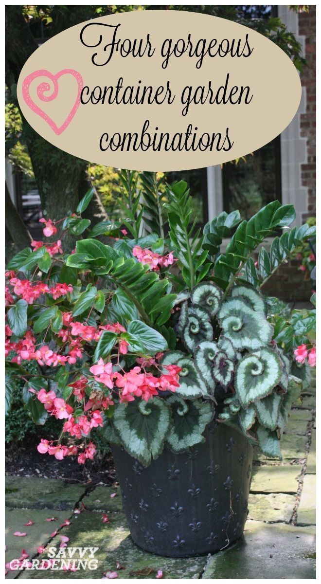 Use this container gardening cheat sheet to