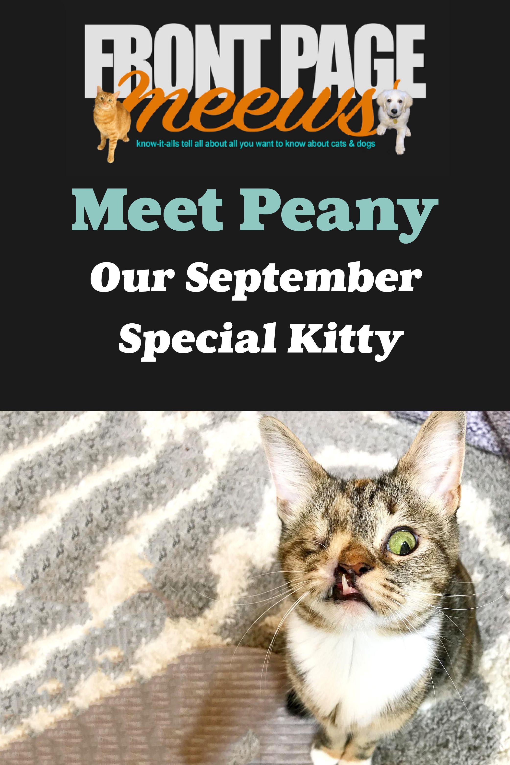 Meet Peany A Quirky Cutie Dog meet, Pet news, Quirky