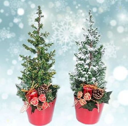 Set of 3 Tabletop Snowy Christmas Trees 25cm tall Get into the