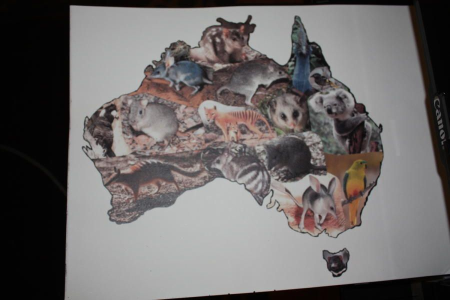 Aussies Take the Cake - Endangered/Extinct Animals and Birds by Louise Neagle