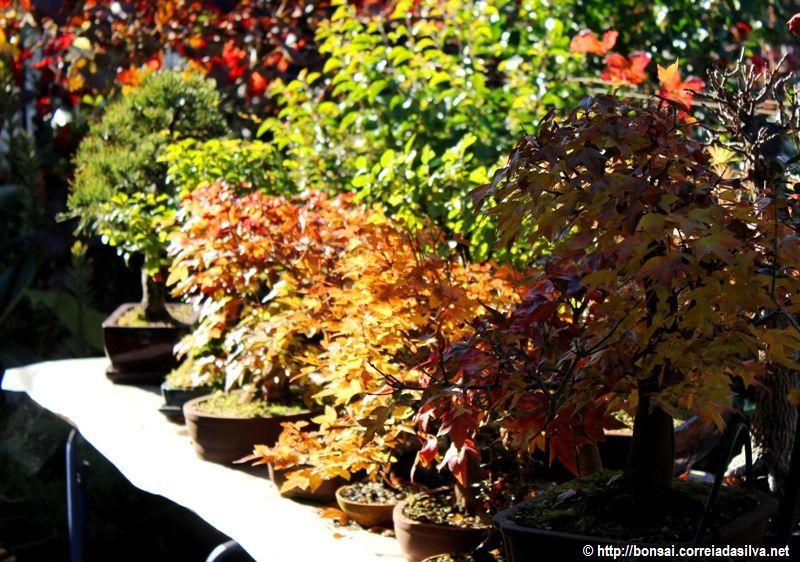 You'll want to warm up in these colors... http://bonsai.correiadasilva.net/pt/bonsai-cuidados-como-fazer/2013/297-outono-vai-querer-aquecer-se-nestas-cores