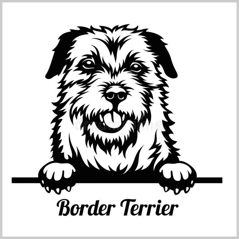 Border Terrier - Peeking Dogs - Breed Face Head Is