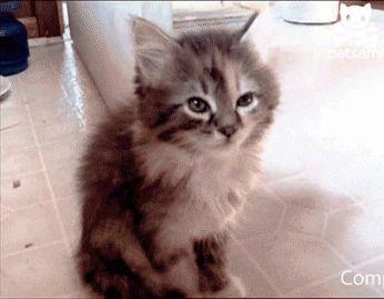 Kittttyyy