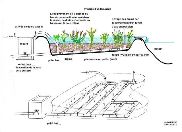 Principe du lagunage bassin pinterest bassin de jardin bassin et jardins - Fabriquer un bassin naturel reims ...