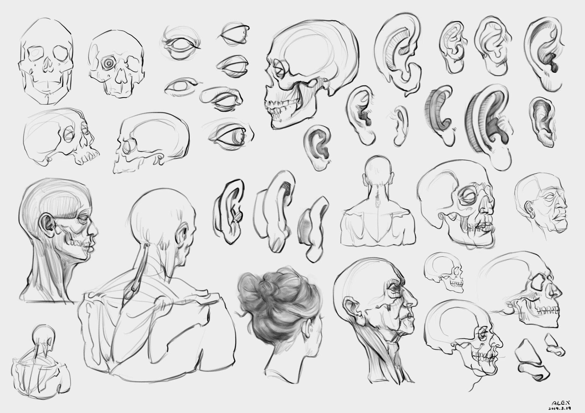 Artstation anatomy study alex rain anatomy study