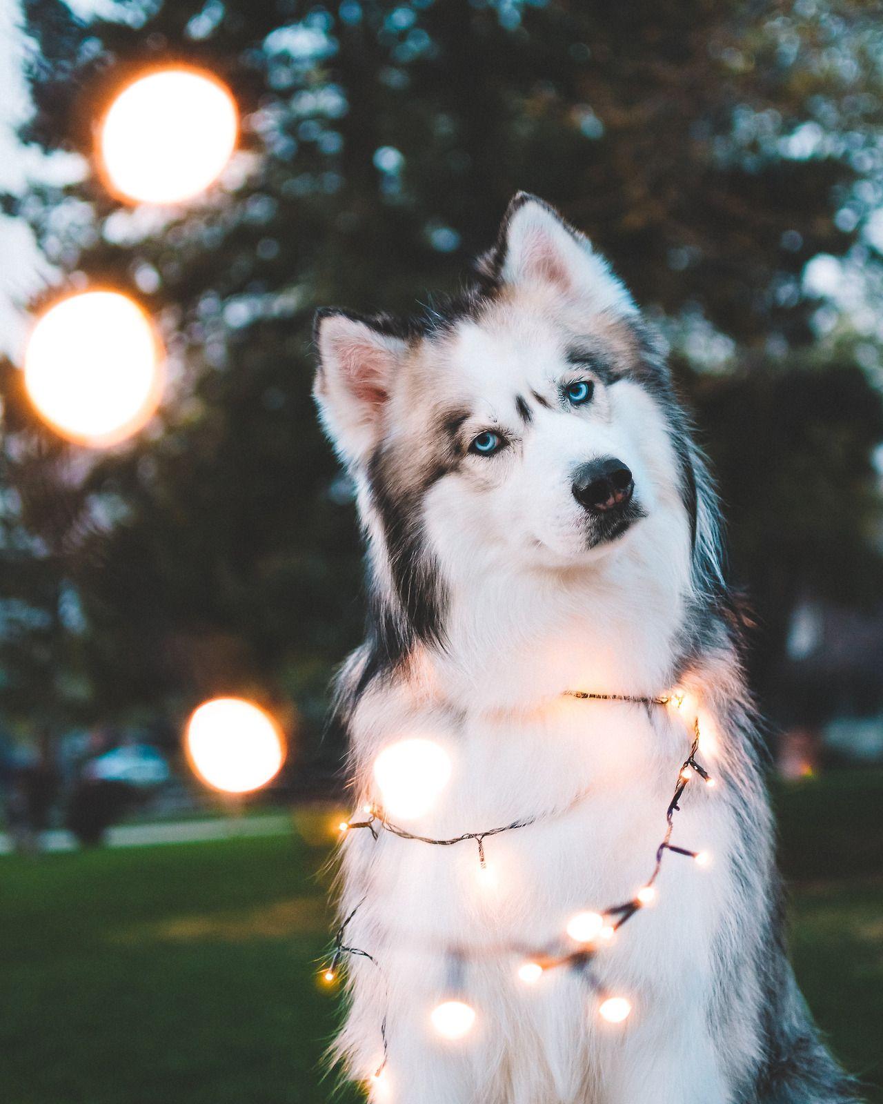 pinterest: paigelikes 》 | Doggos | Pinterest | Hunde, Tier und süße ...