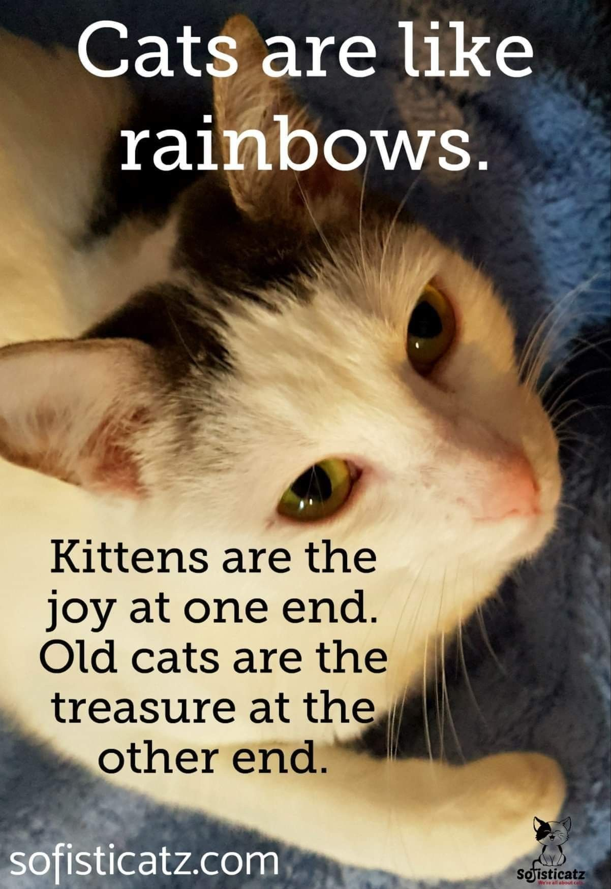 Pin By Vivian J On Cat Cuties Cat Quotes Funny Cats Old Cats