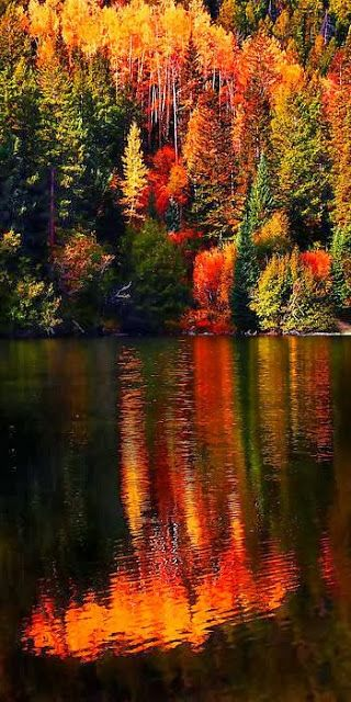 10 amazing autumn photographs - beautiful time of the year