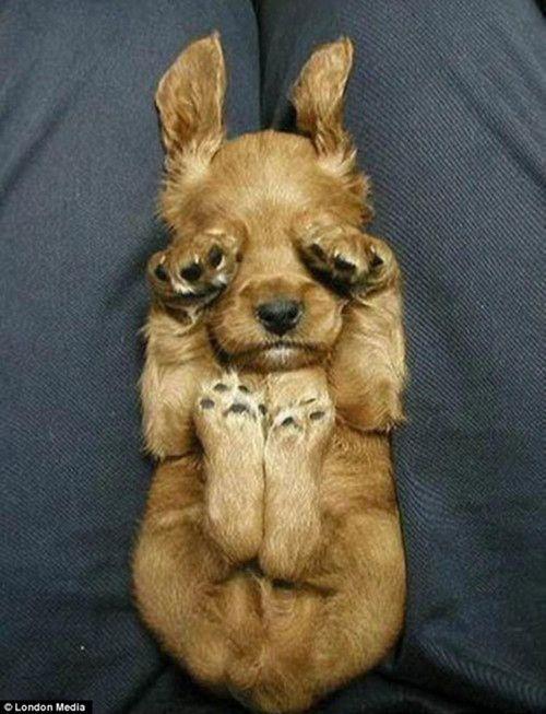 The Bizarre Ways That Dogs Like To Sleep Cute Animals Baby