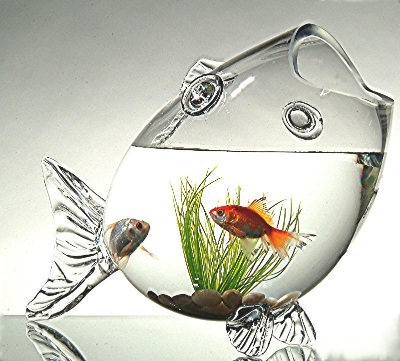 Un bocal tr s original design d coration luxe home for Bocal aquarium original