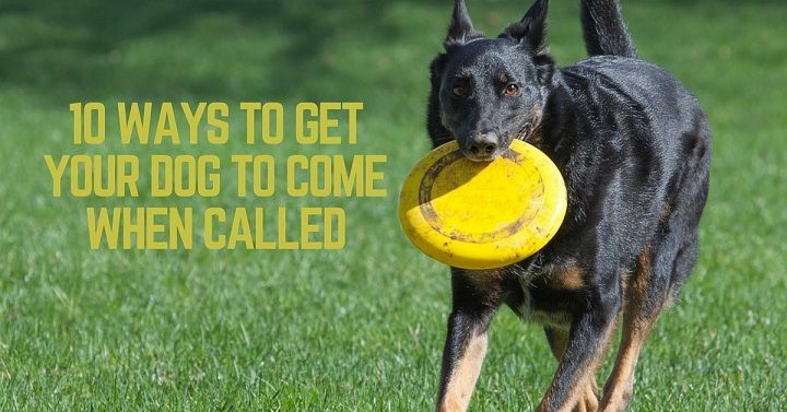 10 ways to get your dog to come when called that mutt