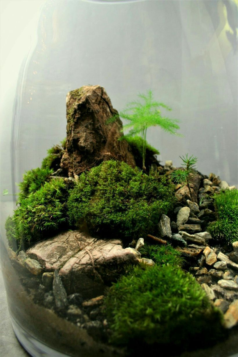 Bonsai terrarium for landscaping miniature inside the jars by