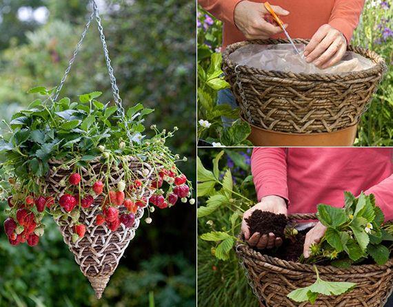 erdbeeren pflanzen in diy containers so geht s erdbeeren pflanzen erdbeeren und container. Black Bedroom Furniture Sets. Home Design Ideas