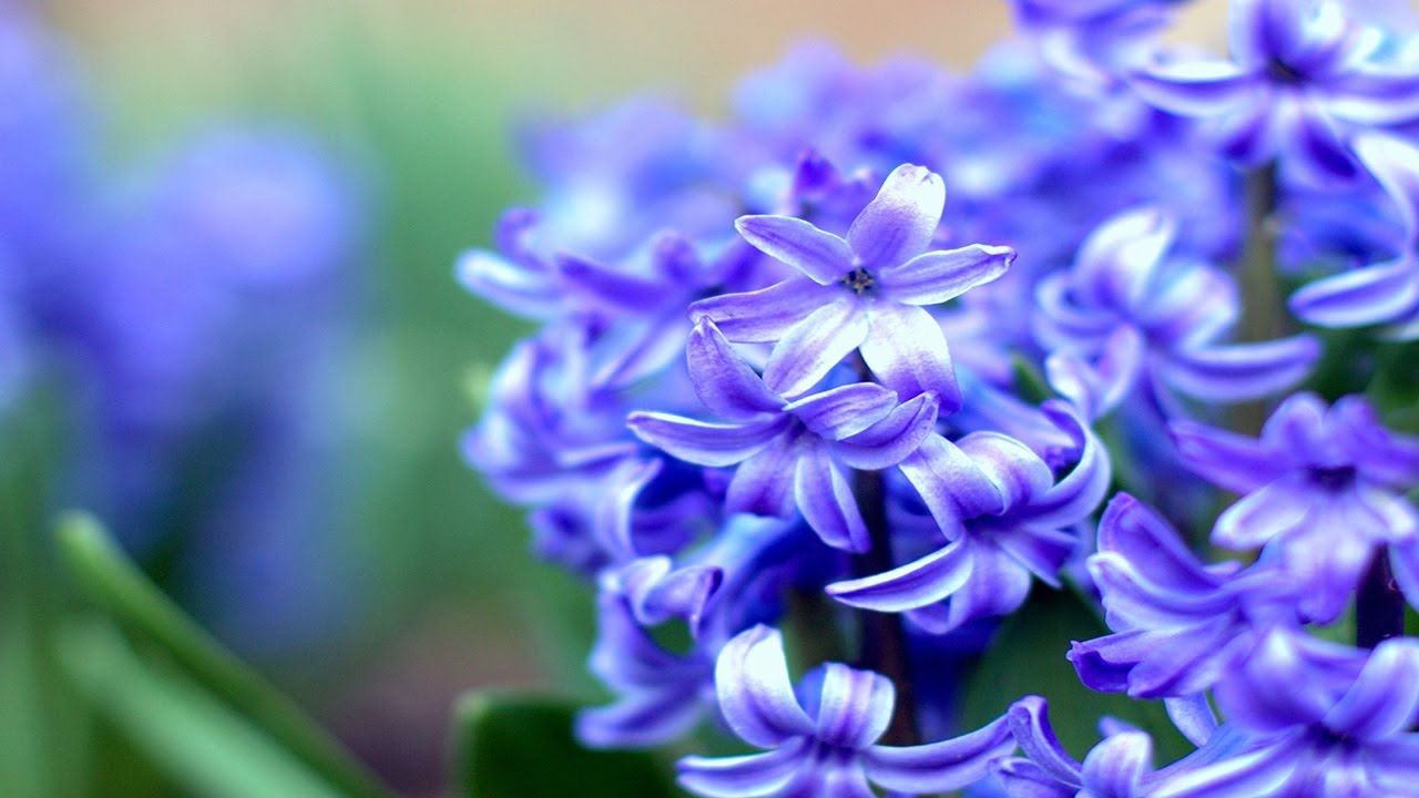 Top 10 List Of Most Beautiful Flowers In The World Youtube In