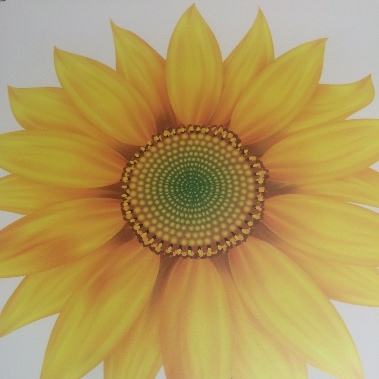 Sunflower Wall Mural Decal Sunflower Wallpaper Art Sticker Sunflower ...