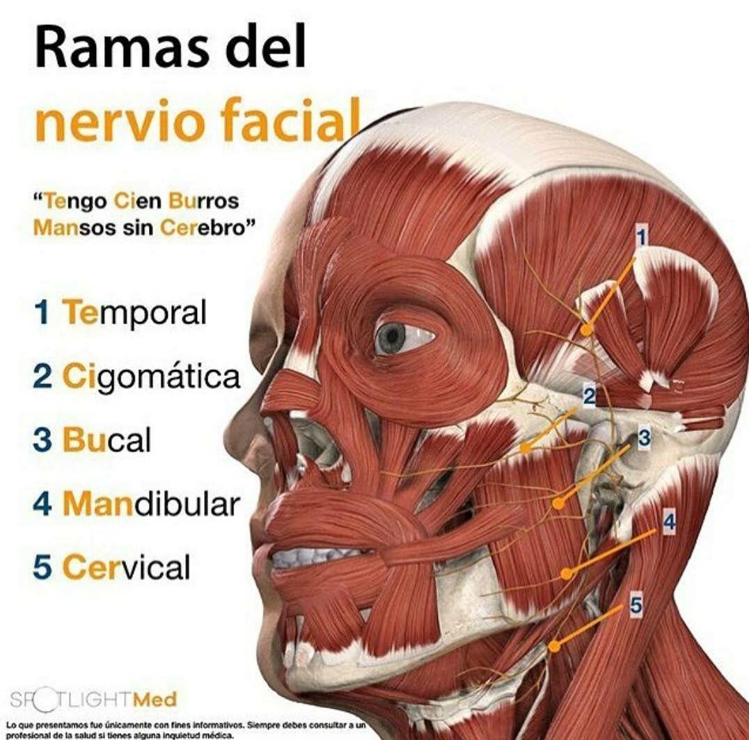 Pin de Andreina Ledezma en Medicina | Pinterest | Medicina, Anatomía ...