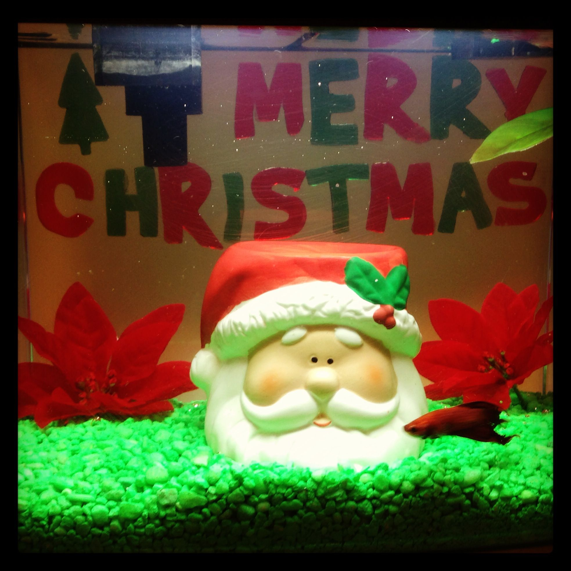 Christmas decor for fish tank | Christmas! | Pinterest ...