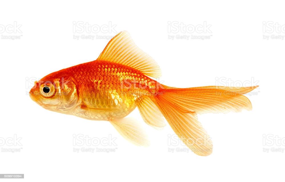 Pin On Zivali V Sladkov Ribe