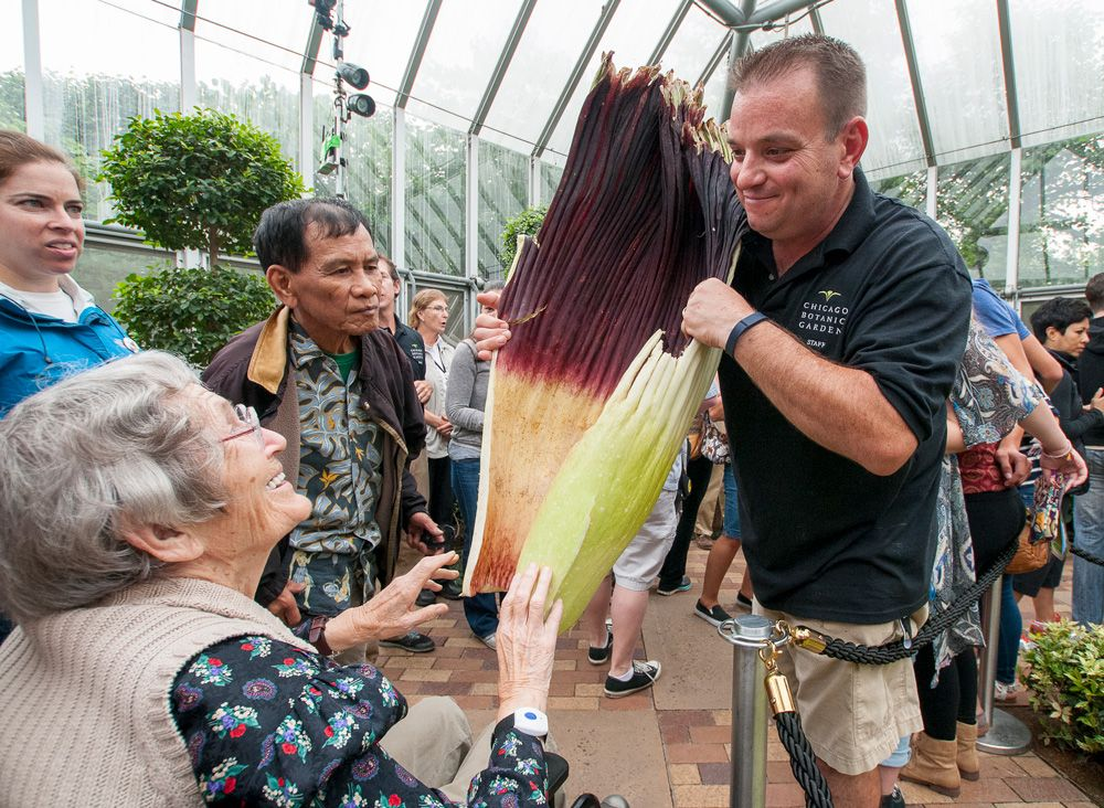Spike, the corpse flower with Titan Tim in 2015 Fast