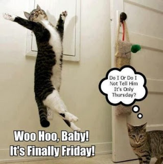 Top 20 Funny Thursday Memes 20 Best Quotes For Hilarious Thursdays Happy Birthday Funny Cats Top 20 Funniest Clean Funny Memes