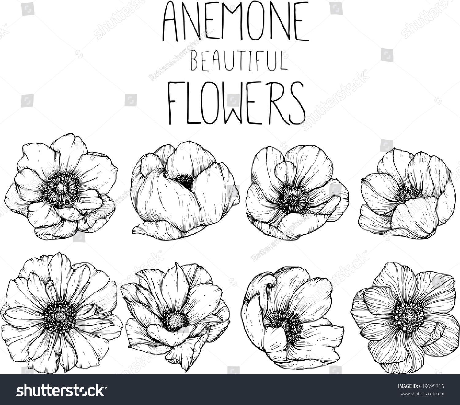 Drawing Anemone Flowers Illustration Vector And Clip Art Ad Sponsored Flowers Anemone Drawing Illus In 2020 Flower Drawing Flower Illustration Ink Illustrations