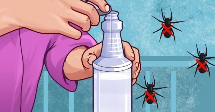 10 fa ons de se d barrasser des araign es pour de bon. Black Bedroom Furniture Sets. Home Design Ideas