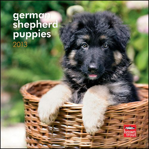 German Shepherd Puppies Mini Wall Calendar: With pointed ears and fuzzy fur, German Shepherd puppies are handsome little dogs. They are a joy to watch while they play, and a joy to hug. Already you can see the incredible poise and intelligence that will make them such wonderful companions when they reach adulthood.  $7.99  http://calendars.com/German-Shepherds/German-Shepherd-Puppies-2013-Mini-Wall-Calendar/prod201300004497/?categoryId=cat10014=cat10014#