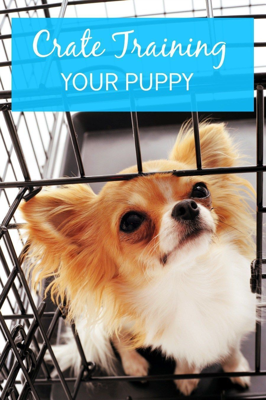 Crate Training Chihuahua Puppy Puppytrainingeasy