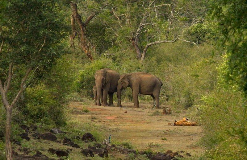 Enjoy Wildlife & Jungle Safari in Jim Corbett National ...