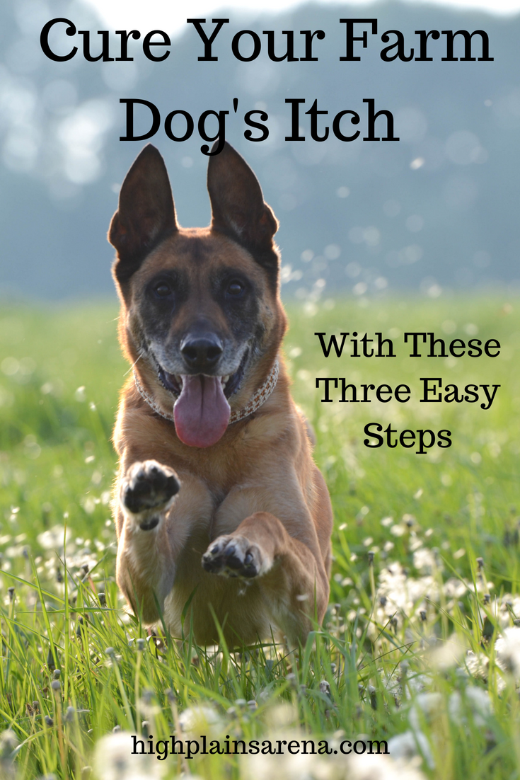 Three Easy Steps To Treating Your Farm Dog S Itchy Skin Without Expensive Allergy Shots Plus More Natural Remedies D With Images Excited Dog Dog Training Aggressive Dog