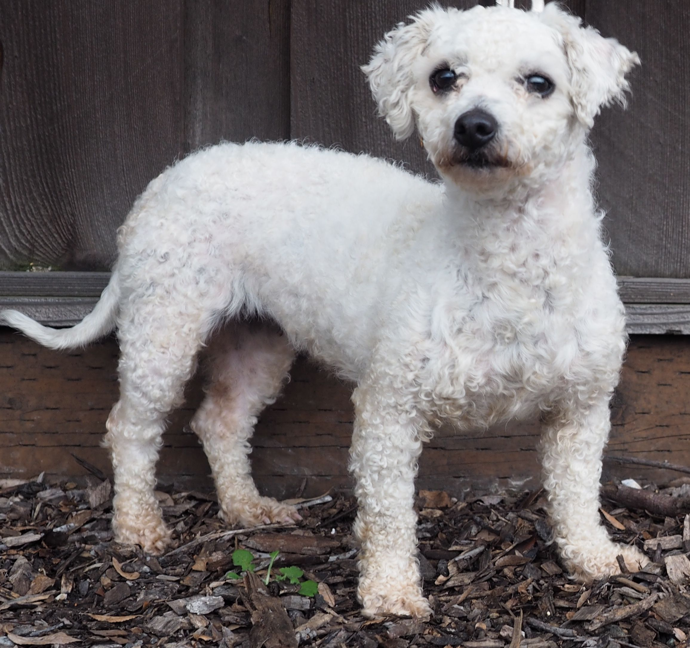 Cantel dog for adoption in palo alto ca adn468537 on