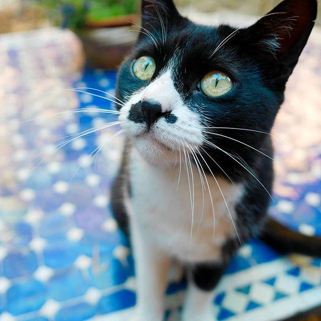 Ces derniers temps j'ai beaucoup photographié la petite dernière mais j'ai deux minettes et je les aime autant l'une que l'autre même si elles sont totalement différentes ... : #catlover forever   . . . . . . #catphotography #lovecats #catsofinstagram #catpic #ilovemycat #adorable #catsoftheworld #cat_of_instagram #catlovers #catoftheday #instacat #cats #animals #petsagram #pets #pet #cat #tropmignonne