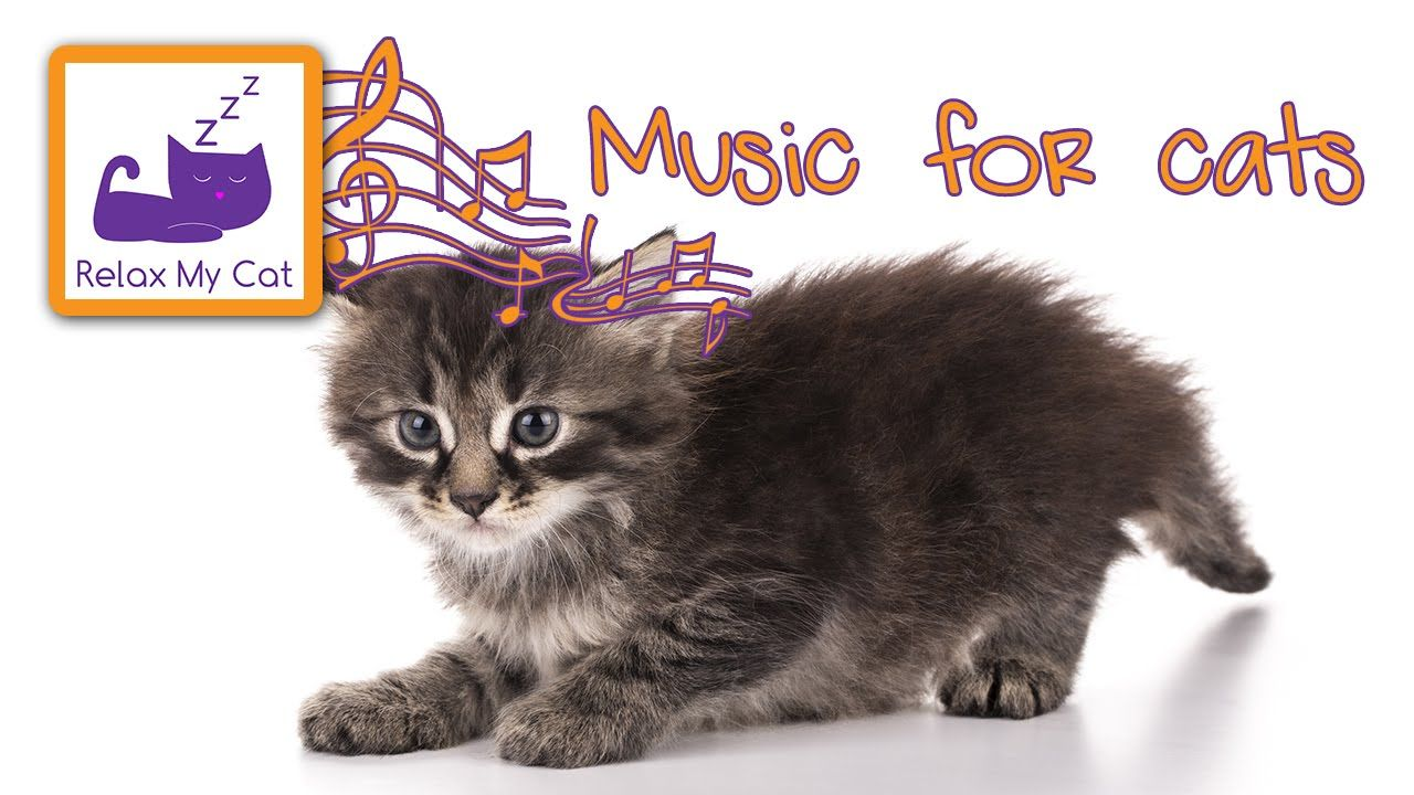 Music for cats - calm down your cat with this soothing cat music