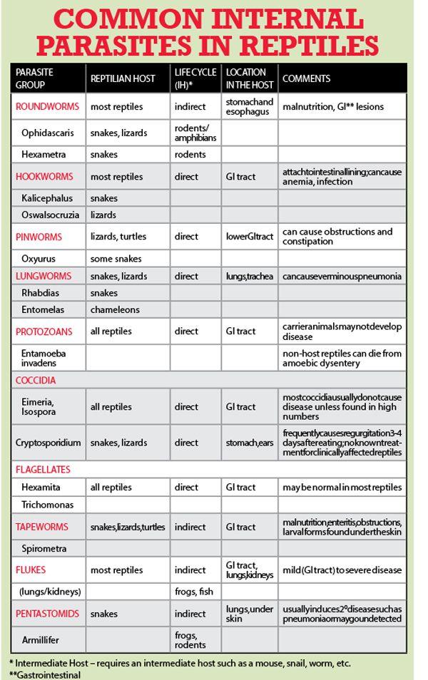 The Vet Report A List Of Common Internal Parasites In Reptiles Vet Medicine Reptiles Animal Medicine