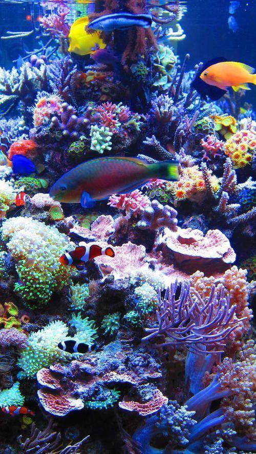 Fish Ocean And Iphone Image Fish Image Iphone Ocean Tropicalfishocean Beautiful Sea Creatures Ocean Life Photography Ocean Fishing