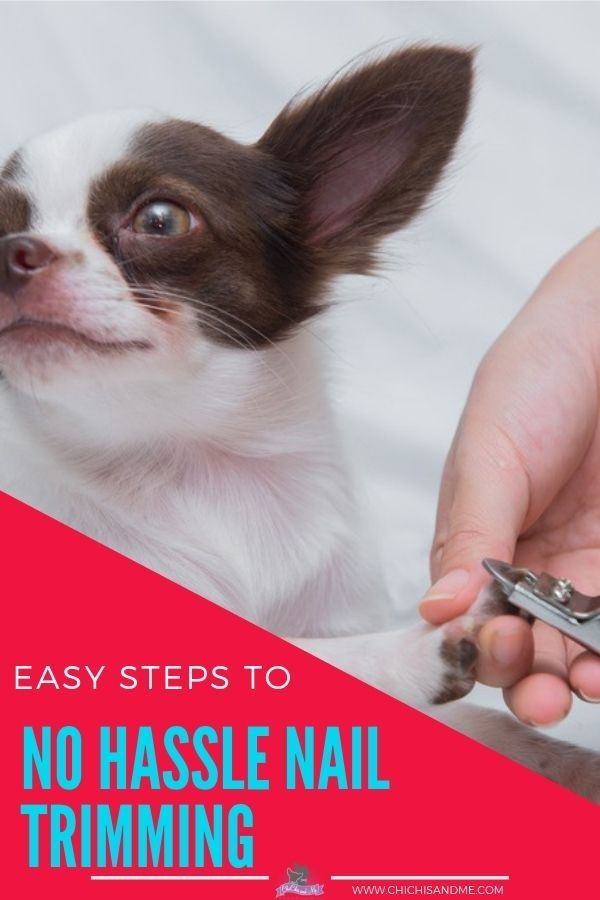 Getting Your Dog's Nails Trimmed Without The Fuss. Easy