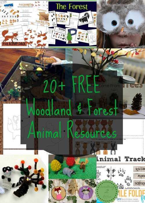 Summer is a great time to learn all about woodland and forest animals.