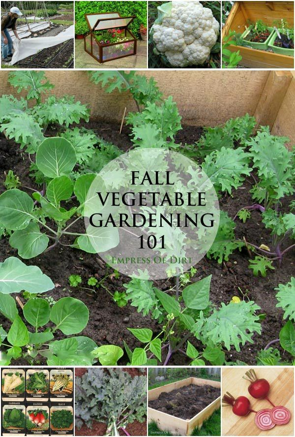 Fall Vegetable Gardening 101 | Cold weather, Weather and Rounding