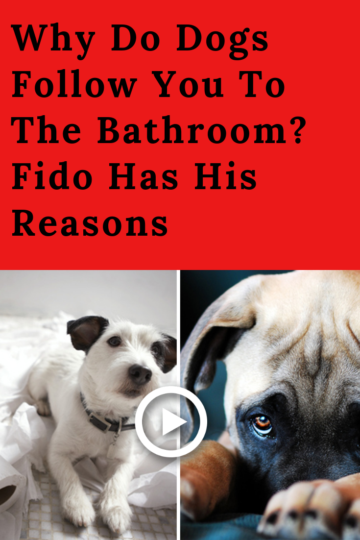 Dogs Are Adorable Affectionate And Absolutely Loyal Animals If You Have A Dog You Will Always Have Company Sometimes This G Dogs Master Bathroom Puppy Eyes