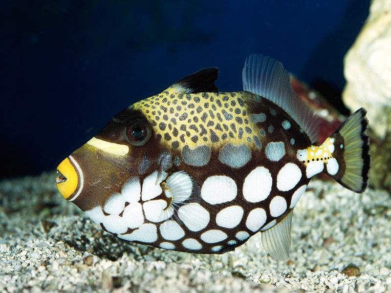 Sfondo pesci tropicali 2629 decorazione pesce for Sfondi pesci tropicali