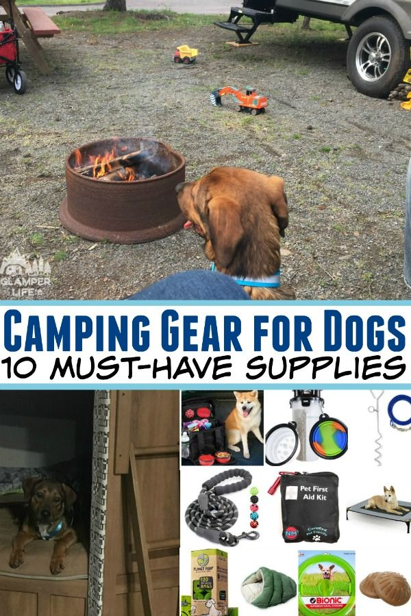 Photo of Must-Have Camping Gear for Dogs – the 10 Best Supplies for your Furry Friend!
