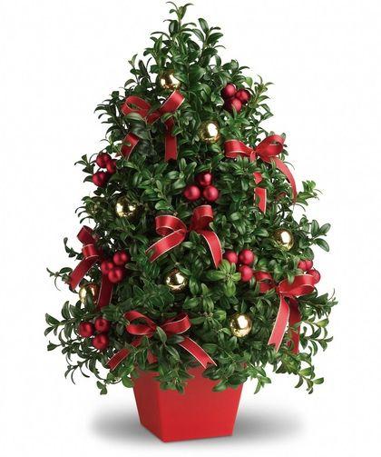 Boxwood Christmas Tree | Christmas flower arrangements ...