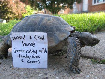 Almost 40 desert tortoises are up for adoption in Utah
