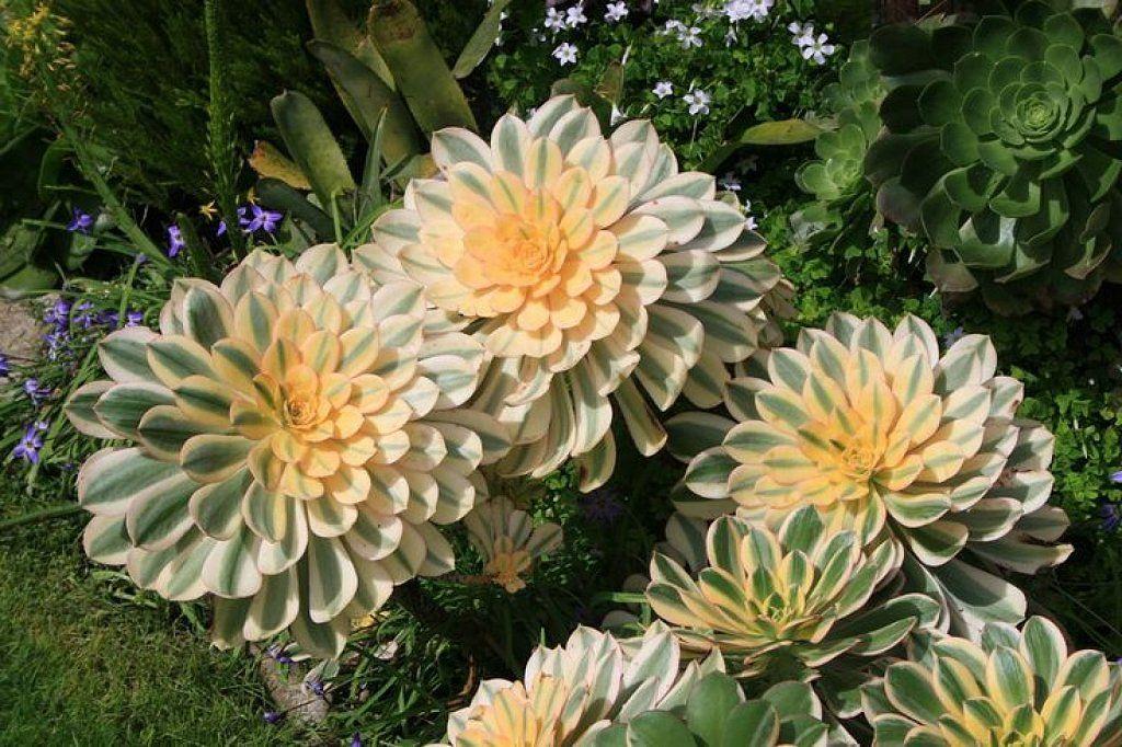 Una planta de color cambiante